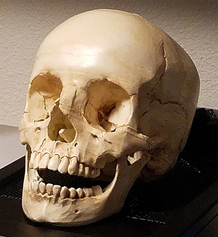 human_skull_01